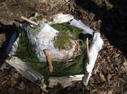 Wooded Ritual